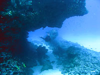 Site de plongée d'Atimoo Plongée Madagascar : Avaratse