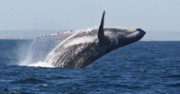 Saut de baleine : la retombée -