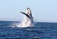 Saut de baleine : l'envol -