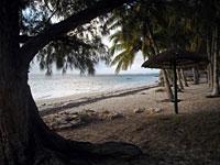 Filaos and coconut trees, the beach under grey sky - Mangily -