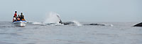 Mer bouillonnante et observateurs de baleines - 21/08/09
