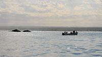 Deux baleines, la côte et des observateurs... - 21/08/09