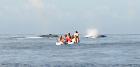 Observateurs suivant les baleines - 21/08/09