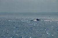 Baleines  - 21/08/09