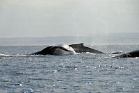 Baleines en mouvement - 21/08/09