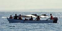 La côte, baleines, touristes... - 21/08/09