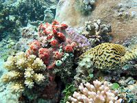 Assortiment corallien - 02/09/12