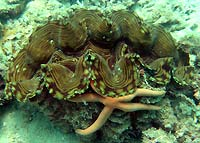 Clam and starfish hugging - 02/02/07