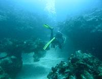 Entrée d'un canyon, pente externe du récif d'Ifaty - 02/04/07