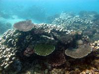 Coraux divers du Jardin de corail - 25/08/12