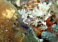 Site de plongée d'Atimoo Plongée Madagascar : Jardin de Corail