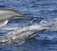 Les longs becs des dauphins  - 03/07/12