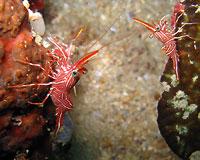 Crevettes de Durban - 02/09/12