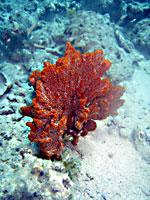 Red sponge - 20/10/08