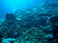 Site de plongée d'Atimoo Plongée Madagascar : L'Espagnole