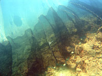 Filet sur Vatobe : par quoi le corail meurt - 01/04/07