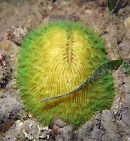 Corail champignon, vert pétant - 27/12/15