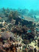 En mon jardin de corail... - 25/08/12