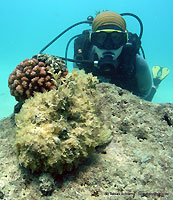 Julie and the stonefish - 17/11/11