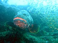 Atimoo Madagascar Dive site : Bevato