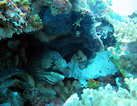 Masked moray and scorpion leaf fish - 01/09/12