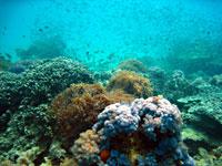 At Vatobe, left coral - 20/10/08