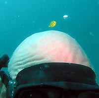 young pilot fish and old shark skull - 29/01/07