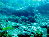 Site de plongée d'Atimoo Plongée Madagascar : Snappers Point