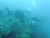 Mérou malabar et ses copains plongeurs - 23/10/06