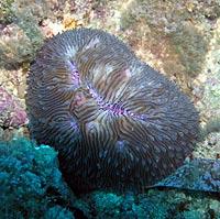 Corail champignon bleu - 21/04/08