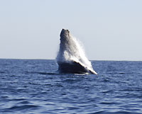 saut 1 : essor de la baleine - 24/06/12