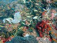 Pente corallienne de Snappers point - 24/07/12