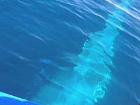 Une baleine sous le bateau - 01/09/13