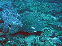 Site de plongée d'Atimoo Plongée Madagascar : SA5