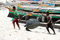 Seaturtle going to death - 23/10/13