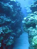 Site de plongée d'Atimoo Plongée Madagascar : Walhall