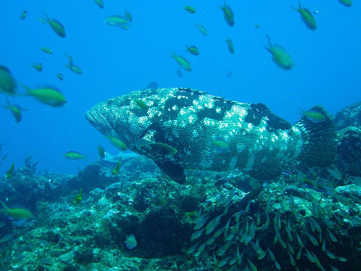 grouper wiki dating bedste dating site yahoo svar