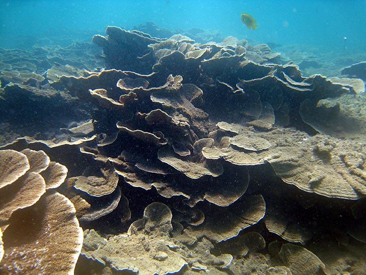 Photo,  Roses de corail : vue générale prise par Corine Diacon
