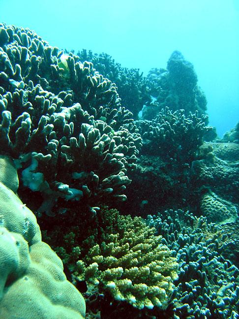 Photo,  Paysages de jardin de corail #4 prise par Stéphane Engel