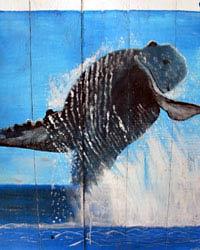 Enseigne du whalewatching