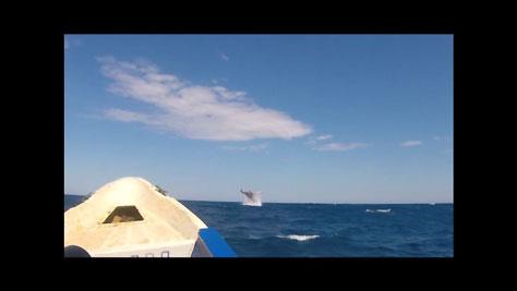 - La saison baleines à bosse 2019 -  - Stéphane Engel