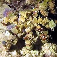 Atimoo Madagascar Dive site : Jardin de Corail