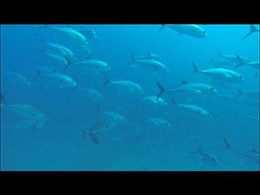 Site de plongée d'Atimoo Plongée Madagascar : Alohaloha
