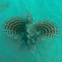 Site de plongée d'Atimoo Plongée Madagascar : Vatosoa